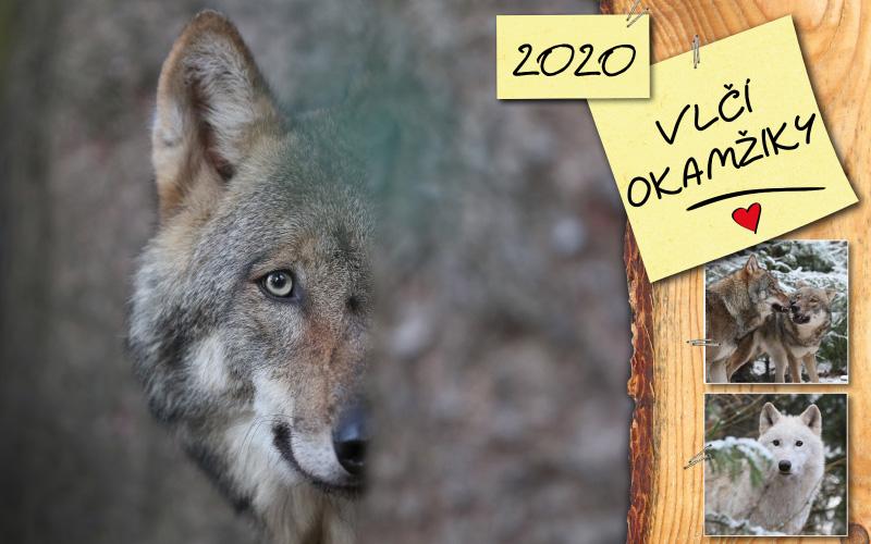 Kalendář - Vlčí okamžiky 2020