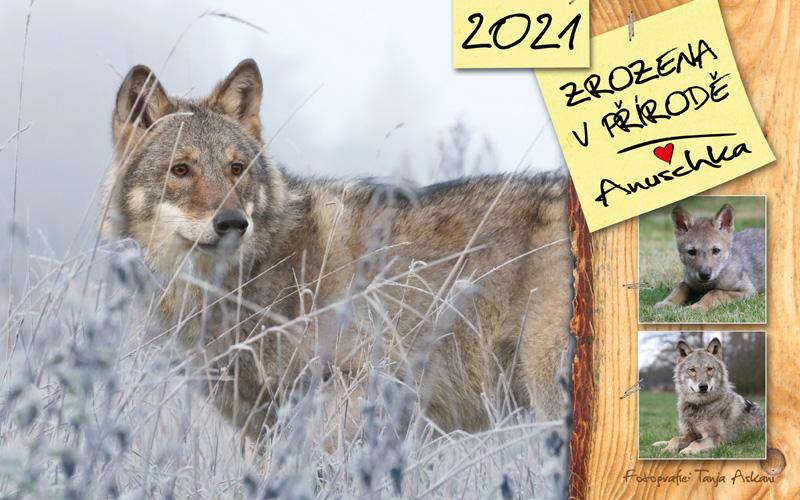 Kalendář - Zrozena v přírodě 2020